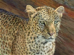 Leopard, Maasai Mara II by Tony Forrest -  sized 24x18 inches. Available from Whitewall Galleries